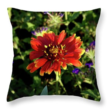 Red Gaillardia Throw Pillow by Douglas Barnett