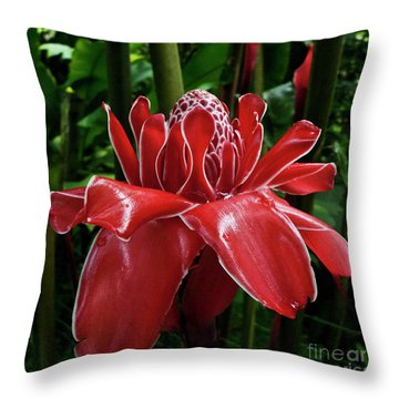 Red Ginger Lily Throw Pillow by Heiko Koehrer-Wagner