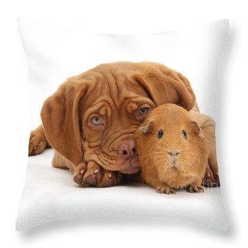 Red Guinea Pig And Dogue De Bordeaux Throw Pillow