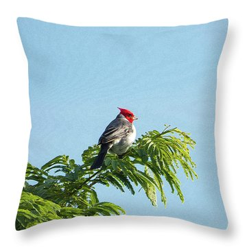 Red-headed Cardinal On A Branch Throw Pillow