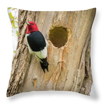 Throw Pillow featuring the photograph Red-headed Woodpecker At Home by Ricky L Jones