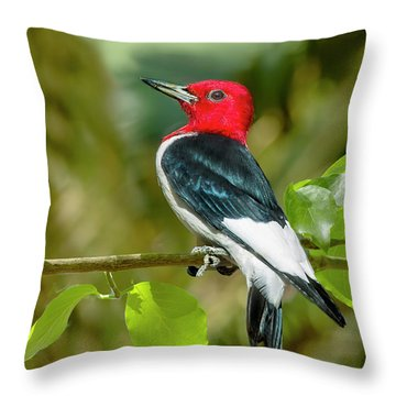 Red-headed Woodpecker Portrait Throw Pillow