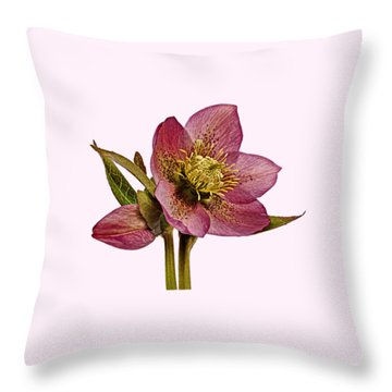 Throw Pillow featuring the photograph Red Hellebore Transparent Background by Paul Gulliver