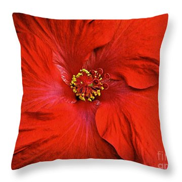 Red Hibiscus Decorative Pillow : Red Hibiscus 2 Photograph by Sarah Loft