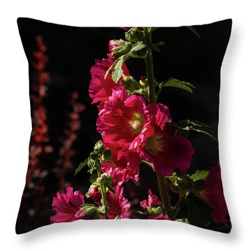 Red Holly In Evening Light Throw Pillow