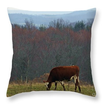 Red Holstein Of The Hills Throw Pillow by Christian Mattison
