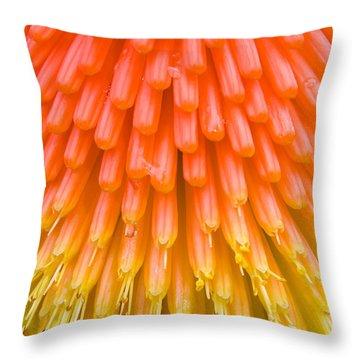 Red Hot Poker Flower Close Up Throw Pillow