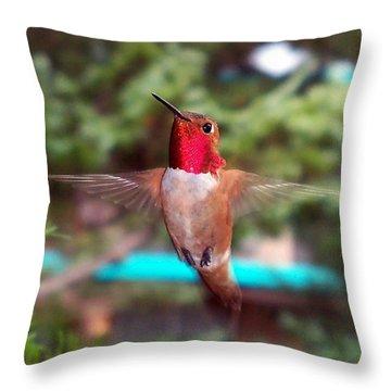 Red Hummingbird Throw Pillow by Joseph Frank Baraba