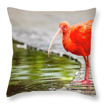 Throw Pillow featuring the photograph Red Ibis by Alexey Stiop