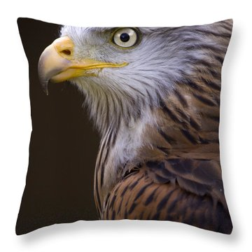 Red Kite Throw Pillow by Angel  Tarantella