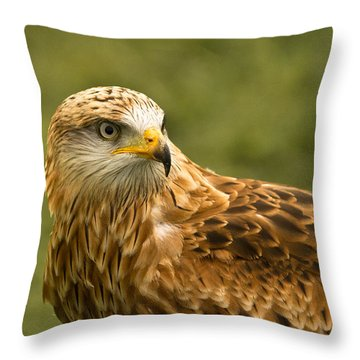 Throw Pillow featuring the photograph Red Kite by Scott Carruthers