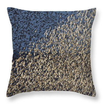 Red Knot At High Tide Throw Pillow