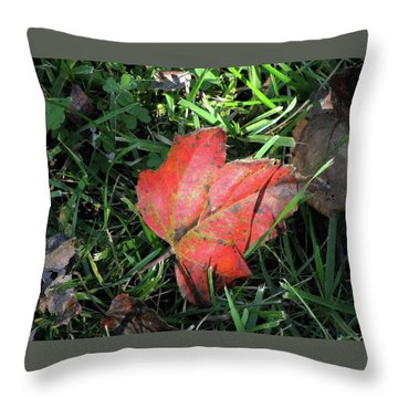 Red Leaf Against Green Grass Throw Pillow by Michele Wilson