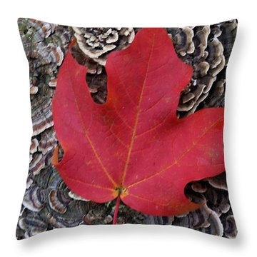 Red Leaf  Throw Pillow by John S