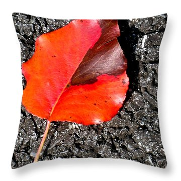 Red Leaf On Asphalt Throw Pillow by Douglas Barnett