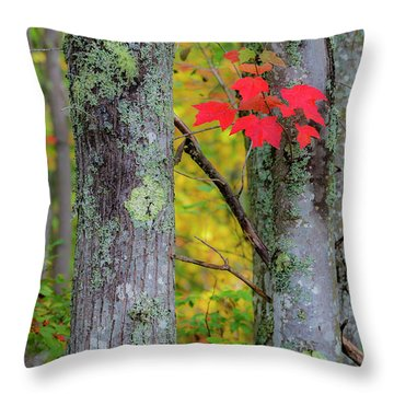 Throw Pillow featuring the photograph Red Leaves by Gary Lengyel