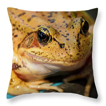 Throw Pillow featuring the photograph Red Leg Frog by Jean Noren
