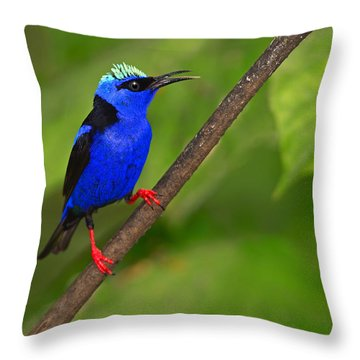 Red-legged Honeycreeper Throw Pillow by Tony Beck