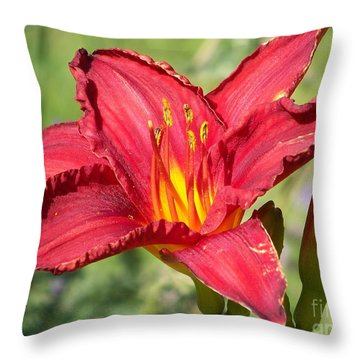 Throw Pillow featuring the photograph Red Flower by Eunice Miller