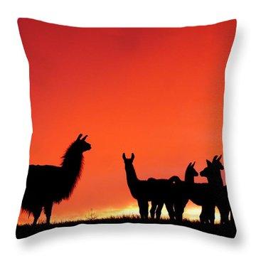 Red Llama Sunset 2 Throw Pillow