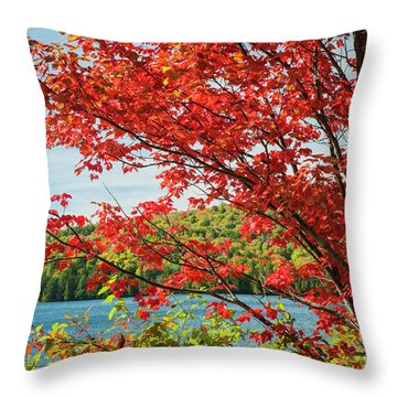 Throw Pillow featuring the photograph Red Maple On Lake Shore by Elena Elisseeva