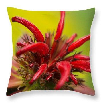 Red Monarda Flowers - Bee Balm Throw Pillow by Christina Rollo
