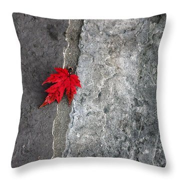 Red On Gray Throw Pillow by Allen Carroll