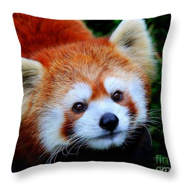 Red Panda Throw Pillow by Davandra Cribbie