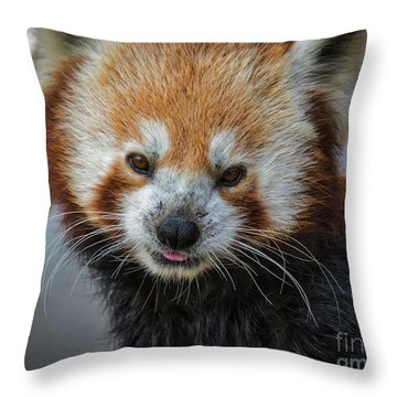 Red Panda Portrait Throw Pillow
