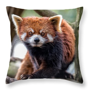 Red Panda V2.0 Throw Pillow