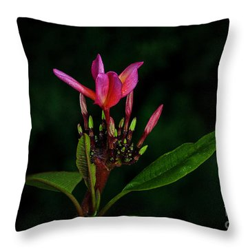 Red Plumeria Throw Pillow