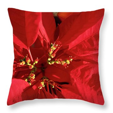 Red Poinsettia Macro Throw Pillow by Sally Weigand