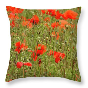 Red Poppies Throw Pillow by Wayne Molyneux