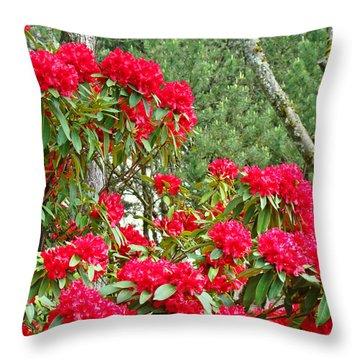 Red Rhododendron Garden Art Prints Rhodies Landscape Baslee Troutman Throw Pillow by Baslee Troutman
