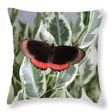 Red Rim Butterfly Throw Pillow