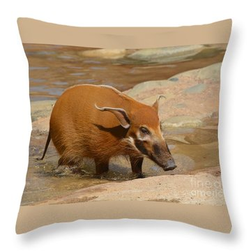 Red River Hog  Throw Pillow