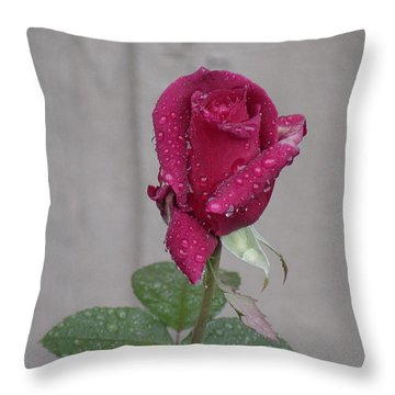 Red Rose In Rain Throw Pillow