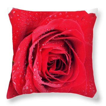 Red Rose Throw Pillow by Kathy M Krause