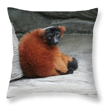 Red Ruffed Lemur Throw Pillow