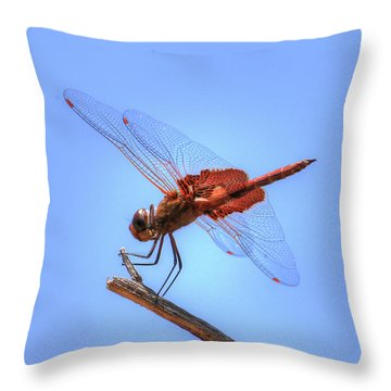 Red Saddlebag Dragonfly Throw Pillow