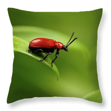 Red Scarlet Lily Beetle On Plant Throw Pillow