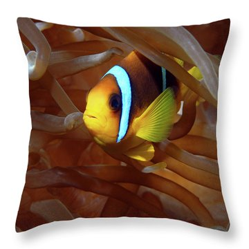 Red Sea Clownfish, Eilat, Israel 8 Throw Pillow