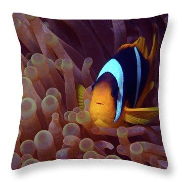 Red Sea Clownfish, Eilat, Israel 9 Throw Pillow