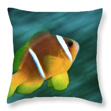Red Sea Clownfish  Throw Pillow by Hagai Nativ