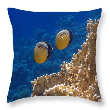 Red Sea Exquisite Butterflyfish  Throw Pillow