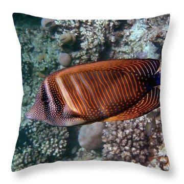 Red Sea Sailfin Tang 3 Throw Pillow