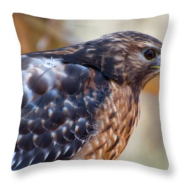 Red Shouldered Hawk 2 Throw Pillow by Chris Flees