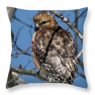 Throw Pillow featuring the photograph Red Shouldered Hawk 2017 by Bill Wakeley