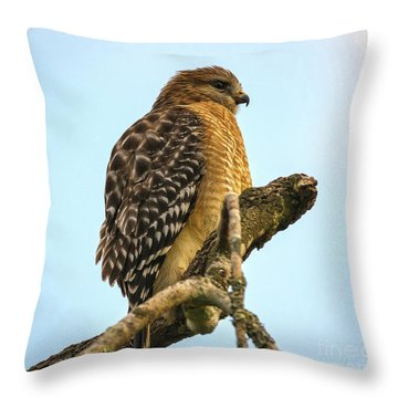 Red-shouldered Hawk - Buteo Lineatus Throw Pillow