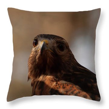 Red Shouldered Hawk Close Up Throw Pillow by Chris Flees
